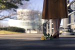 Обои Желтая роза лежит на дороге у ножек девушки, by Ms photography