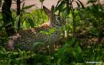 Обои Кролик на земле. Фотограф Майк Рейфман