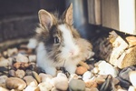 Обои Кролик на камешках, by Erik-Jan Leusink