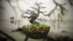 Обои Bonsai / Бонсай искусство выращивания точной копии настоящего дерева в миниатюре