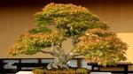 Обои Bansai / Бансай, дерево в миниатюре