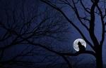 Обои Силуэт кошки на дереве на фоне луны, фотохудожник Bess Hamiti
