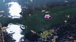 Обои Лужа с каплями дождя и листьев, из аниме Сад изящных слов / Kotonoha no Niwa, аниматор Макото Синкай