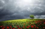 Обои Дерево на поле с маками на фоне облачного неба, фотохудожник Bess Hamiti