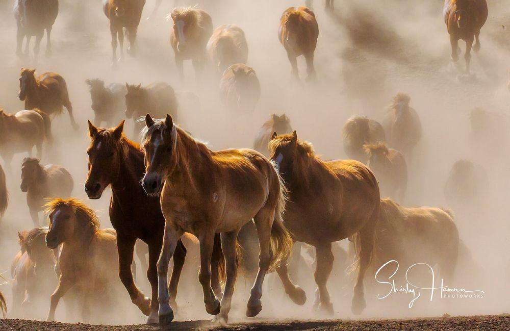 Обои для рабочего стола Табун лошадей, by Shirly Hamra