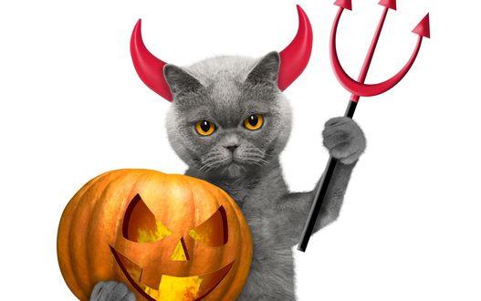 Конкурсная работа Кот с тыквой на белом фоне в костюме на Хэллоуин