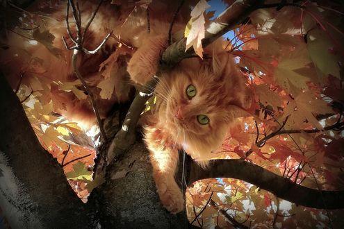 Обои кошки осень (266 обоев) на рабочий стол
