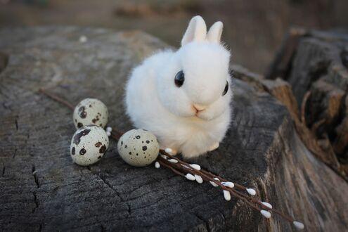 Милый кролик, веточки вербы и яйца на пне