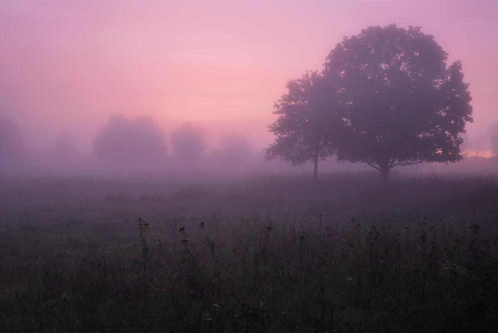 Обои для рабочего стола Туманное утро в сиреневых тонах, фотограф Захаров Дмитрий