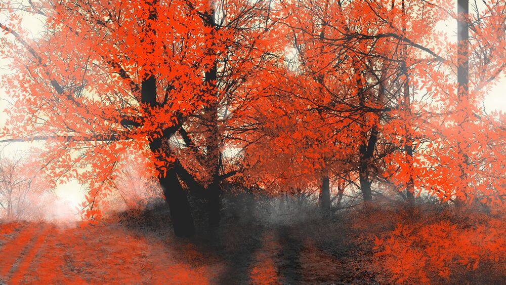 Обои для рабочего стола Размытый фон из осенних деревьев