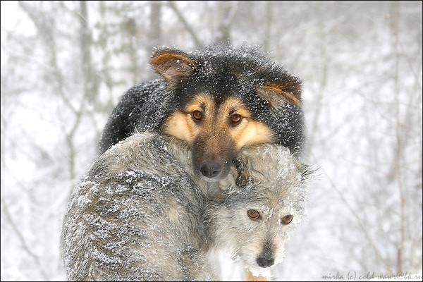 Фото волки просто волки