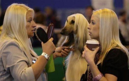 Фото Женщина берёт интервью у девушки.  Рядом стоит собака. У всех троих одинаковые прически (© Magbet), добавлено: 13.04.2010 21:46