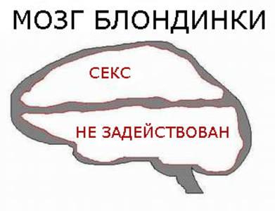 Фото мозг блондинки (© Anatol), добавлено: 22.04.2010 13:54