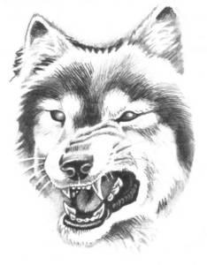 Фото волк (© Anatol), добавлено: 14.05.2010 02:21