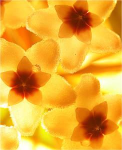 Фото цветы весны (© Anatol), добавлено: 24.05.2010 00:48