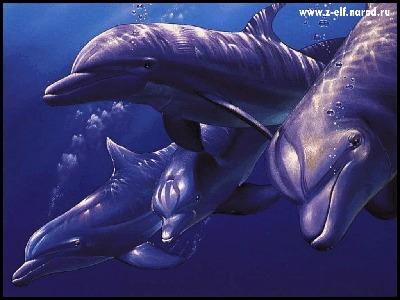Фото dolphin.gif (© Anatol), добавлено: 31.05.2010 00:36