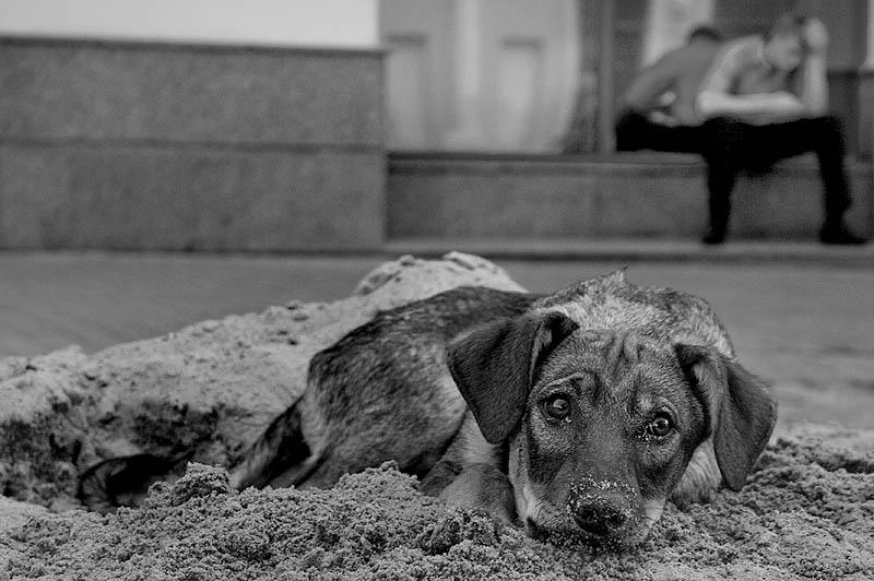 Прикольные картинки бездомных собак, открыток днем строителя