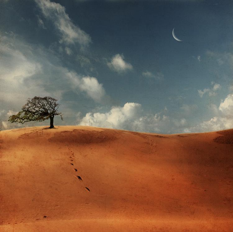 Фото дерево пустыни