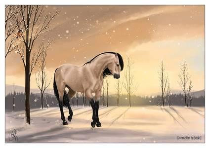 Фото лошадь (© Anatol), добавлено: 04.07.2010 01:14