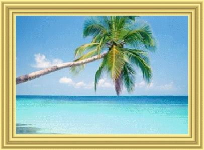 Фото Пальма склонилась над безбрежной синью океана (© Anatol), добавлено: 21.07.2010 00:14