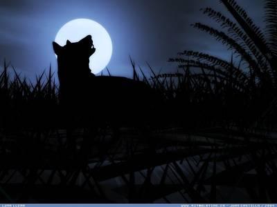 Фото Волк в полнолуние (© Anatol), добавлено: 23.07.2010 22:26
