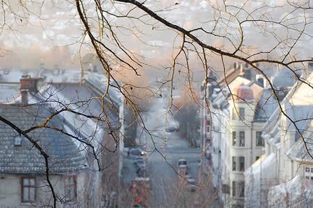 Фото Ветки дерева