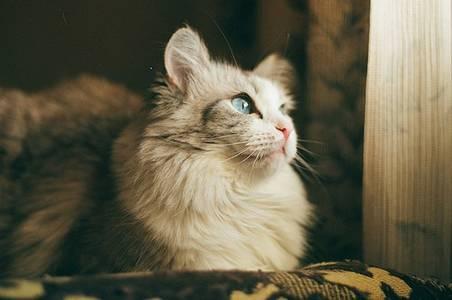 Фото Красивая кошка