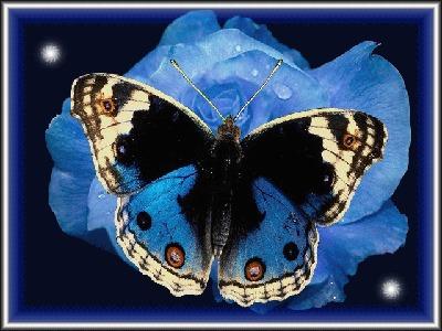 Фото Бабочка на цветке