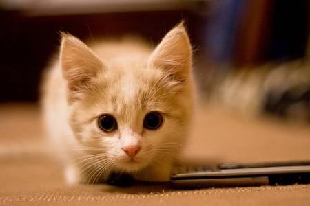 Фото котёнок (© Юки-тян), добавлено: 22.08.2010 09:42