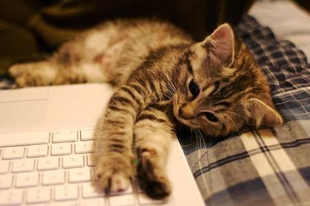 Фото Котик положил лапки на ноутбук