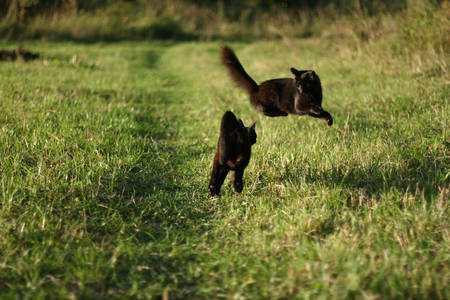 Фото Перепуганный котик