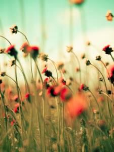 Фото Поле с цветами (© Юки-тян), добавлено: 22.09.2010 18:08