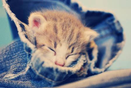 Фото котенок спит (© Louise Leydner), добавлено: 24.09.2010 23:26