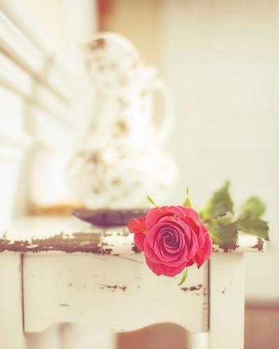 Фото ~Rose~