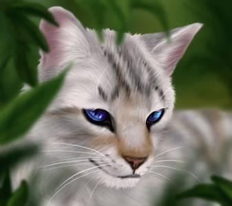 Фото Кошка с голубыми глазами (© Штушка), добавлено: 01.10.2010 23:38