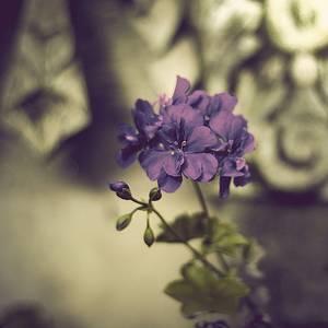 Фото Фиолетовый цветок (© Юки-тян), добавлено: 08.10.2010 19:42