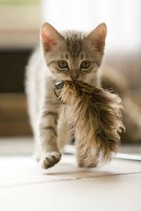 Фото кот несет перо (© Louise Leydner), добавлено: 10.10.2010 18:37