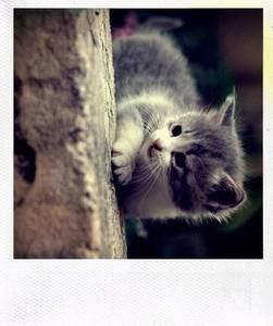 Фото котик