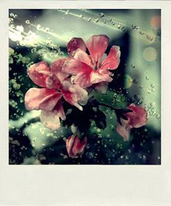 Фото цветі (© Louise Leydner), добавлено: 20.10.2010 16:04