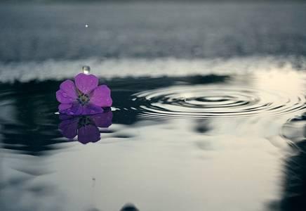Фото Цветок на воде
