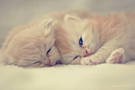 Фото 2 котенка