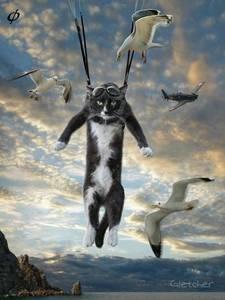 Фото Кот парашютист