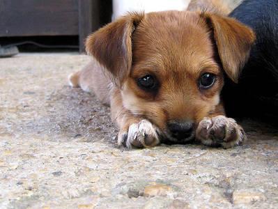 Фото щенок (© Louise Leydner), добавлено: 29.10.2010 15:38