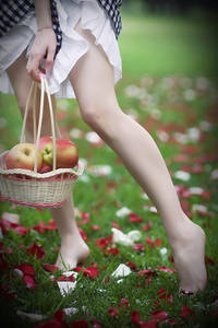 Фото корзина с яблоками (© Louise Leydner), добавлено: 29.10.2010 19:25