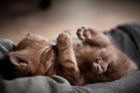 Фото котенок (© Louise Leydner), добавлено: 29.10.2010 21:09