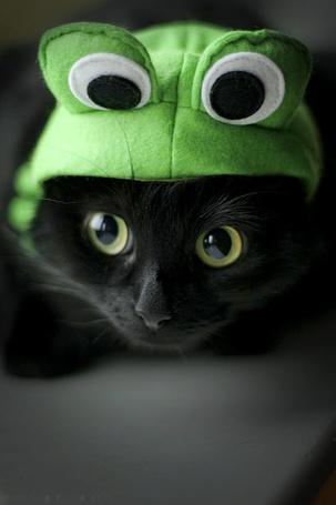 Фото кот в шапке