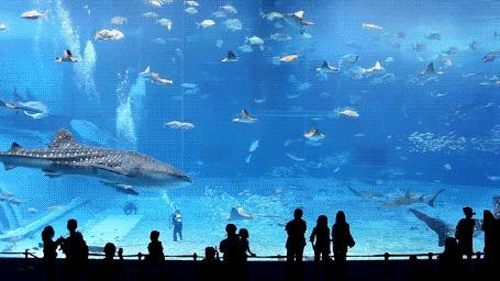 Фото аквариум
