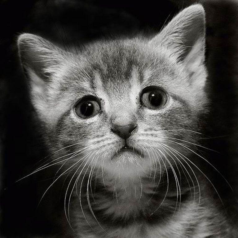 Картинка с грустным котиком, 40-летием