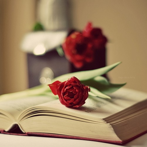 Фото с книгой и цветком