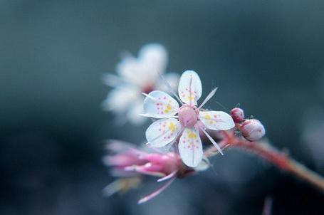Фото Необычные цветы (© Юки-тян), добавлено: 08.11.2010 15:43